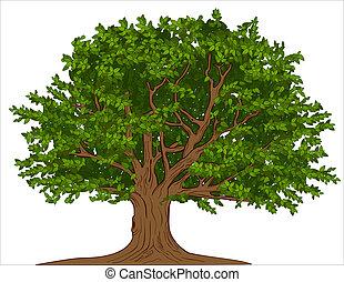 большой, дерево