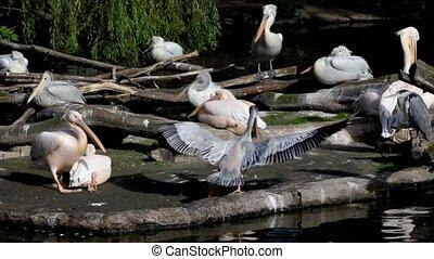 большой, leaves, pelicans, против, зеленый, остров, пакет