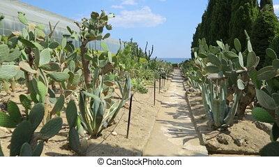 ботанический, сад, cactuses