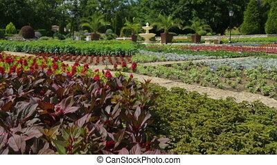 ботанический, plants, сад