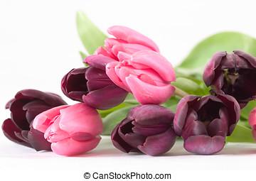 букет, весна, цветок