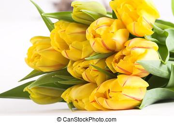 букет, тюльпан, весна