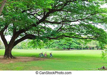 велосипед, парк