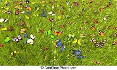 весна, бабочка