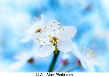 весна, белый, blossoming, цветы
