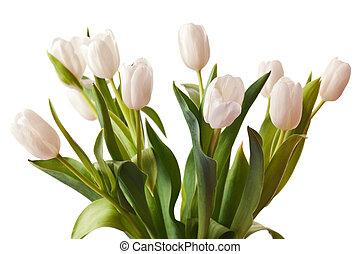 весна, белый, tulips