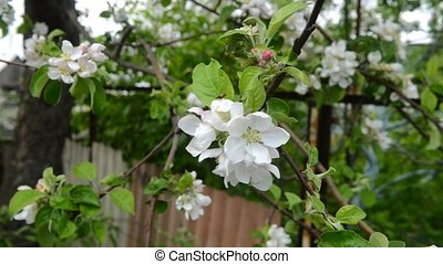 весна, время, дерево, яблоко, blooming