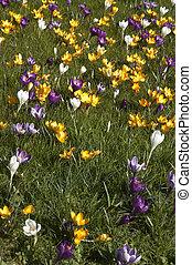 весна, газон