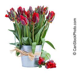 весна, горшок, цветы, красный, тюльпан