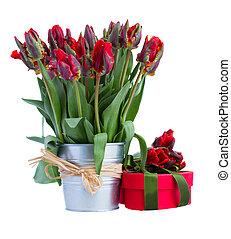 весна, горшок, цветы, настоящее время, тюльпан