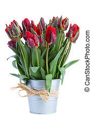 весна, горшок, цветы, тюльпан