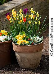 весна, горшок, цветы, цветок