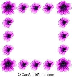 весна, граница, petunias