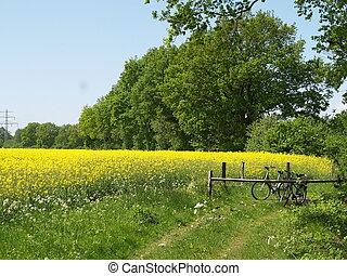 весна, желтый
