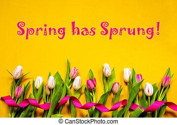 весна, желтый, has, красочный, лента, тюльпан, задний план, захмелевший, цветы, текст