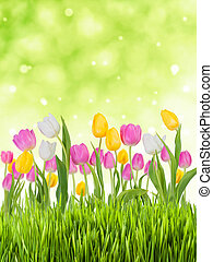 весна, задний план
