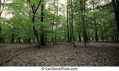 весна, зеленый, дуб, лес, trees
