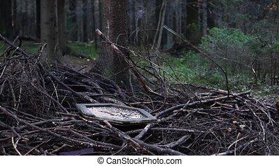 весна, клевать, лес, сосна, сиськи