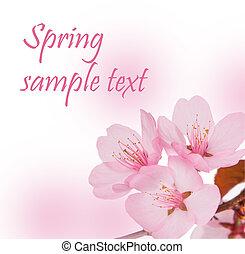 весна, концепция