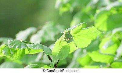 весна, крупный план, зеленый, leaves, молодой