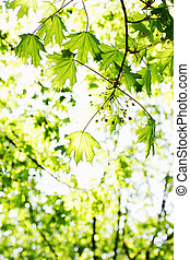 весна, листва