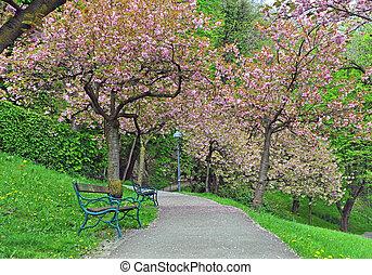 весна, парк, trees, blooming