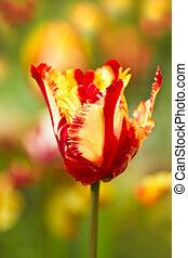 весна, попугай, тюльпан