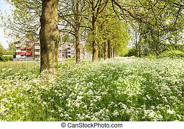 весна, пригород