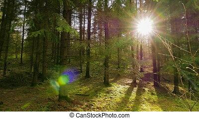весна, солнце, лес, панорама