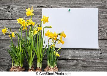 весна, сообщение, daffodils