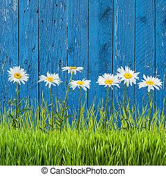 весна, трава