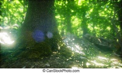 весна, туманный, rays, утро, лес, солнце
