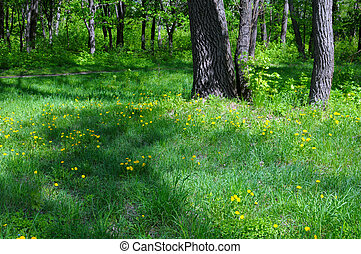 весна, цветение, парк, задний план, trees