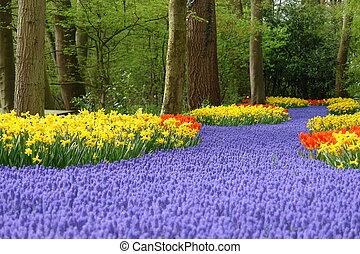 весна, цветок, постель, в, keukenhof