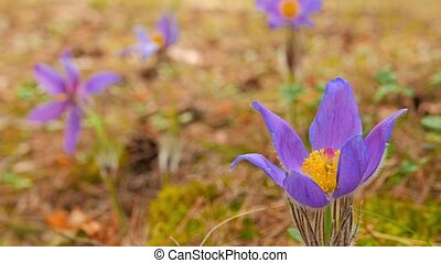 весна, цветы, камера