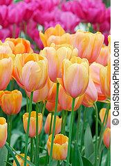 весна, цветы, красочный