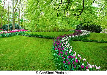 весна, цветы, красочный, тюльпан