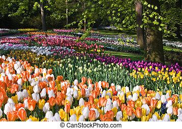весна, цветы, парк, красочный