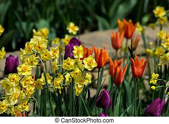весна, цветы, парк