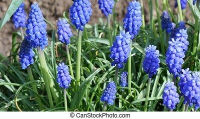 весна, цветы, первый, апрель