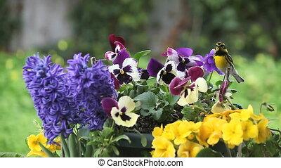весна, цветы, птица, желтый
