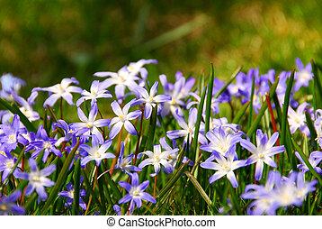 весна, цветы
