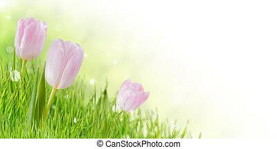 весна, цветы, трава, задний план
