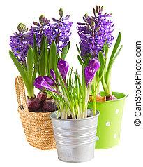 весна, цветы, pots