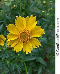 весна, яркий, цветок, желтый