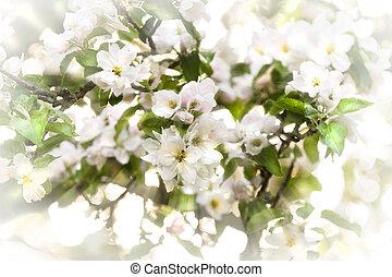 весна, appleblossom