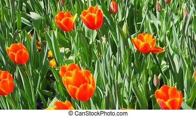 весна, bloom., время