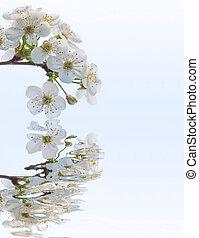 весна, blossoming, филиал