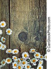весна, daisies