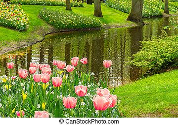 весна, keukenhof, нидерланды, сад